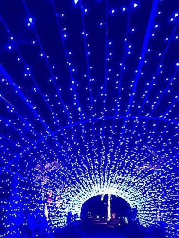 植物園 夜は光のイルミネーション これは光のトンネル いつか、先生の写メアップしますよん お楽しみに✨